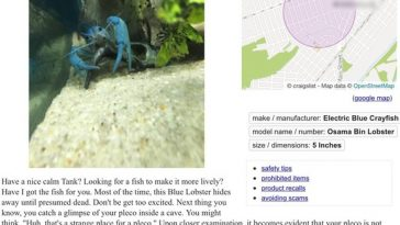 craiglist-blue-lobster-terror