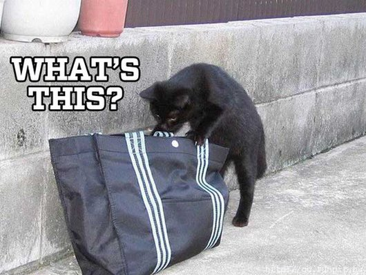 10-cats-trying-to-figure-put-how-the-world-works9