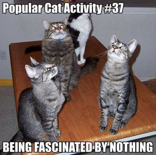 22-things-cat-owners-will-understand03
