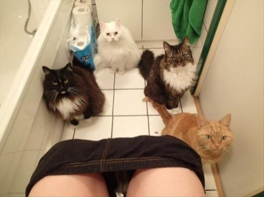 22-things-cat-owners-will-understand05