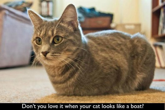 22-things-cat-owners-will-understand08