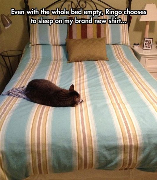 22-things-cat-owners-will-understand13