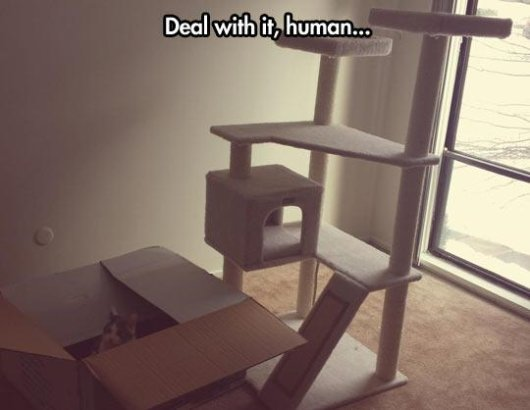 22-things-cat-owners-will-understand17