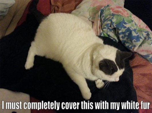 22-things-cat-owners-will-understand19