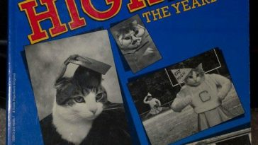 wtf-hilarious-funny-cat-yearbook-cat-photos-yearbook-for-cats1