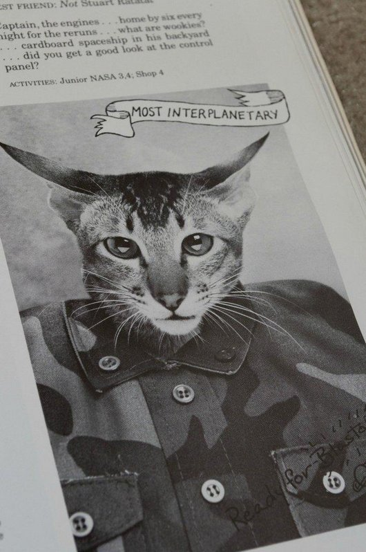 wtf-hilarious-funny-cat-yearbook-cat-photos-yearbook-for-cats13