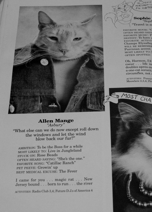 wtf-hilarious-funny-cat-yearbook-cat-photos-yearbook-for-cats17