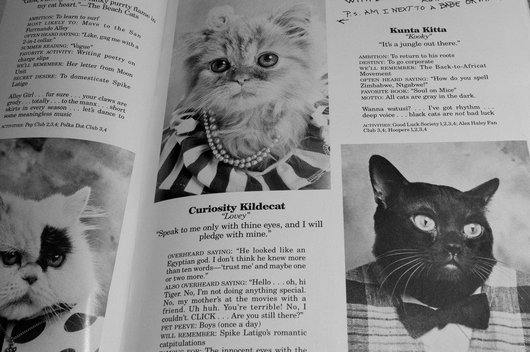 wtf-hilarious-funny-cat-yearbook-cat-photos-yearbook-for-cats6