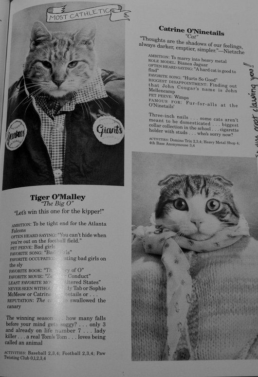 wtf-hilarious-funny-cat-yearbook-cat-photos-yearbook-for-cats7
